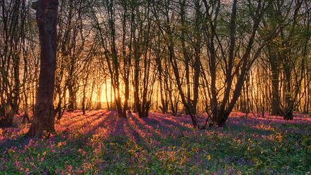 The Herts in Focus exhibition includesDanny Cox's picture'Rise and Shine' taken inHeartwood Forest, St Albans