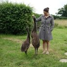 Samantha with her pet emus