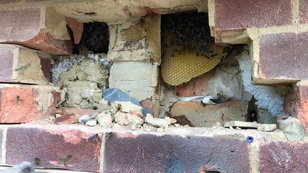 A throwback to when Buzz-Off Honey Bee removed honeybees from a wall cavity in Bircham Newton, Norfolk