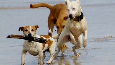 Dogs love nothing better than a play on the beach.