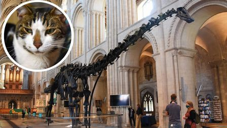 Dippy the dinosaur and Budge the cat - the summer bromance that never was