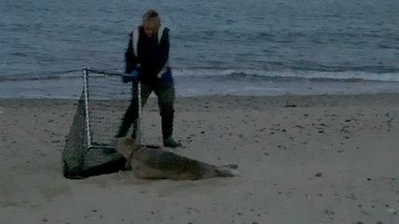 Friends of Horsey Seals rescue seal from Eccles Beach