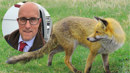 Foxes are on the rise in the city, but is it our responsibility to keep them at bay?