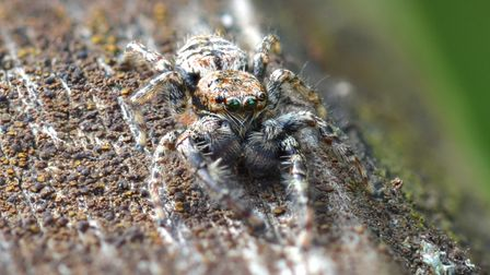 Will Jobbins' picture of a jumping spider wonHerts and Middlesex Wildlife Trust's 'Wild Snaps'photography competition