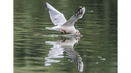 Ricky Barnett took second place with his picture of a gull.