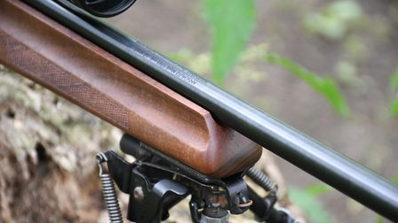 The walnut fore-end on the Anschutz 1761 walnut thumbhole rifle