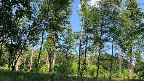 Forestry thinned out for regeneration