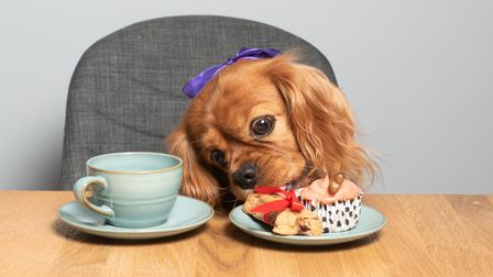 Clementine enjoying an afternoon tea by Hungry Tums Catering. Picture: Sarah Lucy Brown