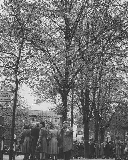 Norwich Streets -- T Trees in Tombland Dated -- 7 May, 1953 Photograph -- C5277