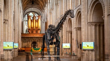 Dippy enjoying a quiet moment alone in the nave of Norwich Cathedral. Photograph: Norwich Cathedral/