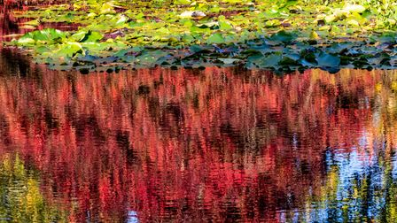 Colourful autumn reflections in a lake, at RHS Rosemoor, Great Torrington, Devon.