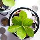 Tree of coins represented saving money and growing of business. Financial and banking concept