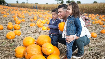 Family with Pumpkins at Undley Farm,