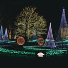 Christmas lights decorate a lawn in attractive patters and around trees