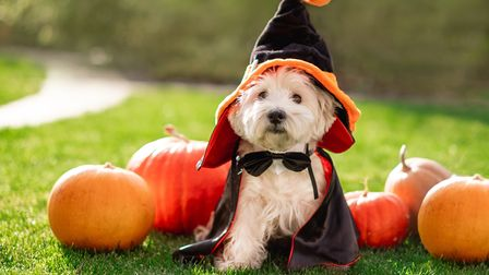Has Halloween become too commercialised?