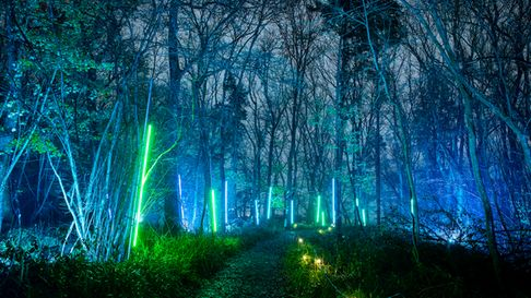 Explore the enchantment of Sussex'slight trails and illuminations this Winter