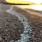 Fish stranded on the pebbled beach at Sidmouth