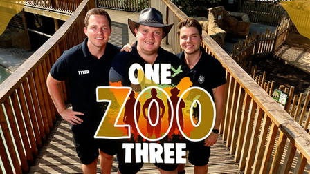 Paradise Wildlife Park's Tyler, Aaron and Cam Whitnall will return in a new series of One Zoo Three for CBBC.