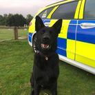 PD Luther