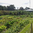 The new vegetable patch at the Lotus Training Centre in Norwich. Picture: Danielle Booden