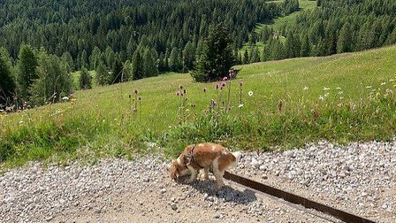Alastair Campbell's holiday snaps from his trip to Europe. Picture: Alastair Campbell